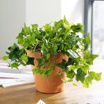Artificial Table Top Plants